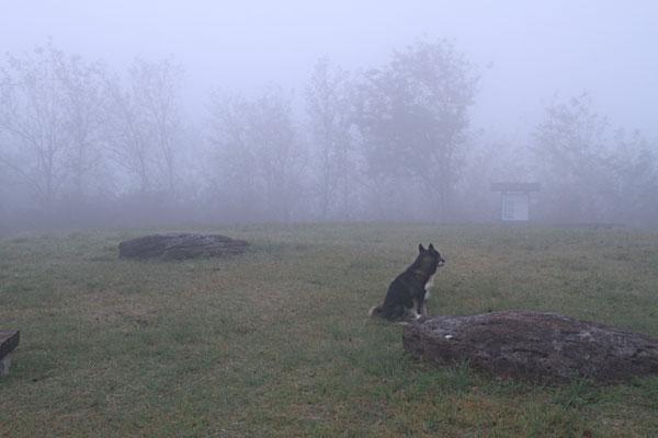 早朝城山の山頂は深い霧でした