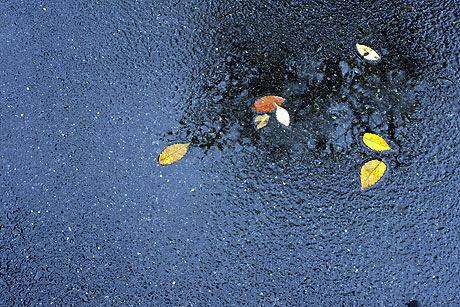 散り始めた落ち葉が 雨に打たれて ・・