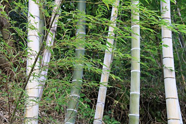 寒風に竹の節々がこすれて悲鳴あげ ・・