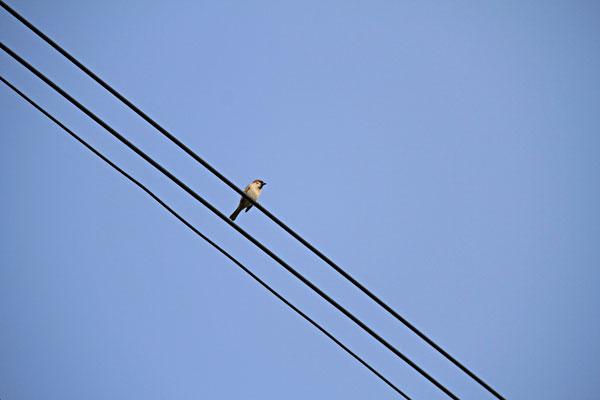 夜明け早々おしゃべり雀に眼が覚める