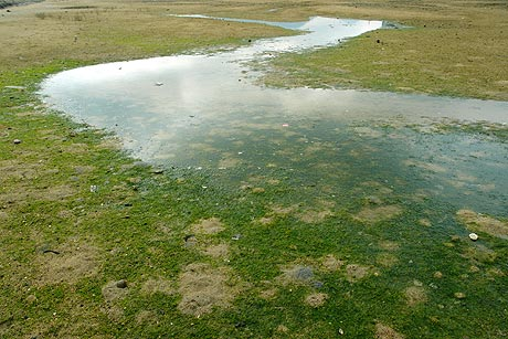 綾川の河口 青さ海苔の模様 ・・