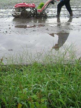 早朝の田植え ・・水が冷たい !