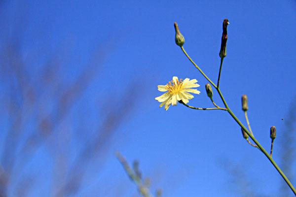 紺碧の空にあそぶ黄色かな