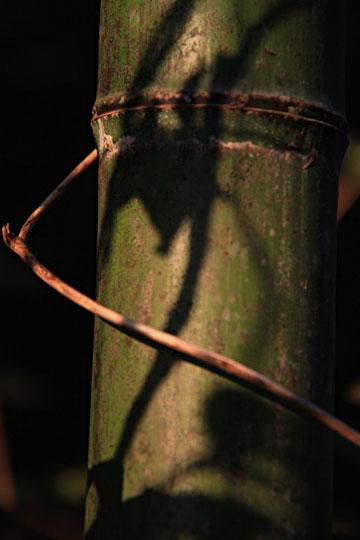 竹の葉の影が濃く ・・・