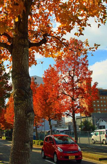 住宅の立並ぶ街の街路樹 ・・・