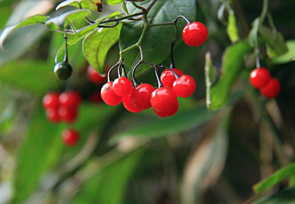赤い実も熟れ明るい日差しに光っている