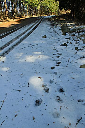 竜王山への途中カーブ毎に氷ついた残雪あり 危険ここまで。