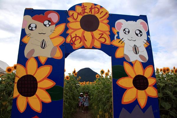 飯山高校の農園のひまわり園 ・・