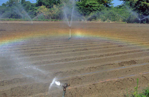 種を蒔く炎暑の畑に散水かな