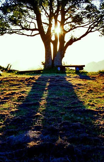 城山山頂の日の出 大きな木の影を映して日は上る・・