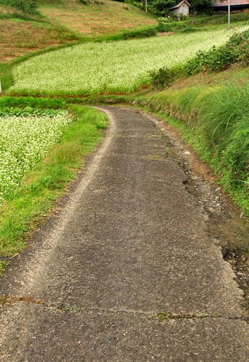 つい10年前まではそばの花の山でした 今は・・