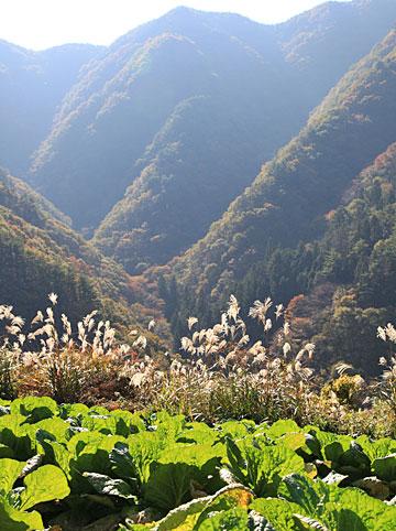 谷あいの野菜にそそぐ秋の日・・