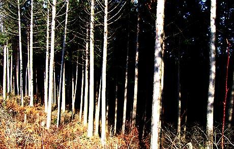峠越え木々も景色もそして気持ちにも変化 ・・