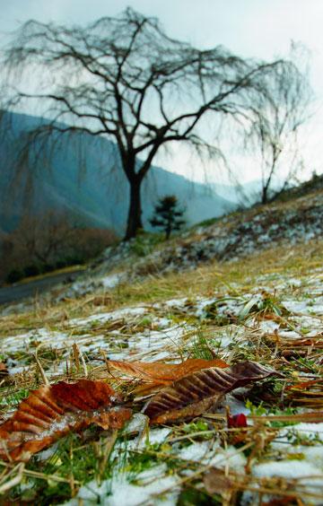 讃岐山脈(琴南)に春を待つ大きな一本の木 ・・