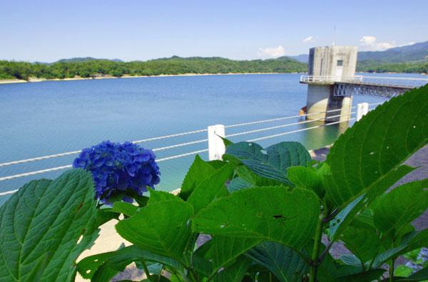日本一のため池 田植え水を15日に放流 ・・