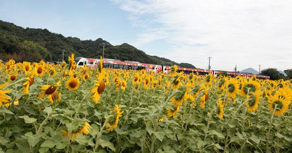 JR塩入駅近く高知へ向かう特急列車ヒマワリをかき分け走り去る・・