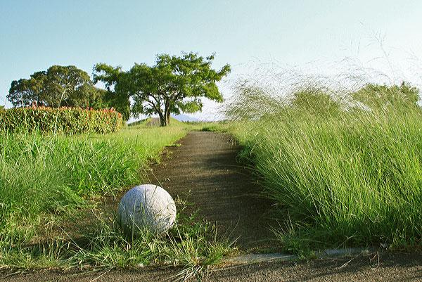 土器川の水辺の楽校の草木にも疲れが ・・