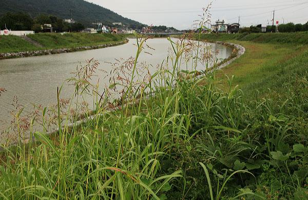 綾川の裾の岸辺 ・・