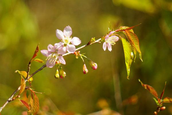 小さなピンクの花が 一杯