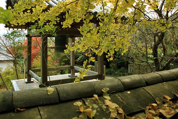 鷲峰寺のいちょう散りゆく秋の終わり かな