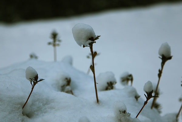 雪帽子ふかふか雪の原野かな