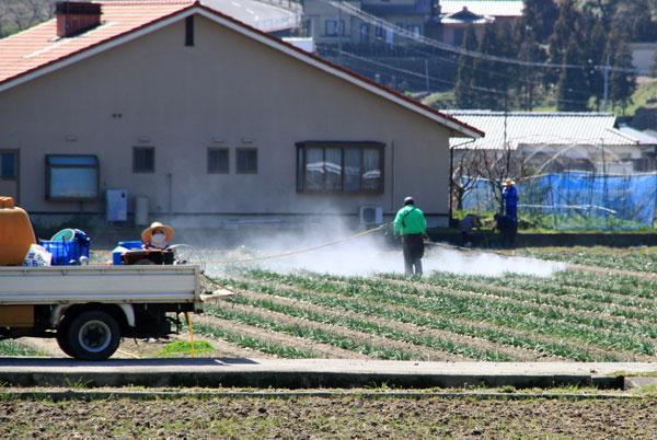 春の晴れた一日一家総出で野菜の予防散布・・