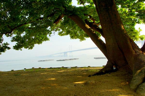 猛暑も浜の樹影は オアシスなり