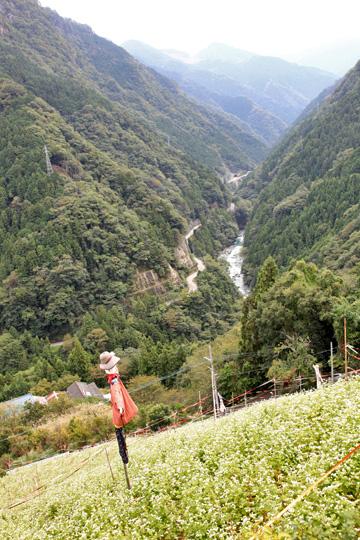 徳島の山中のソバ畑 そよ風にのり咲き誇る ・・