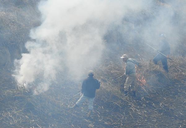 池のまわりの雑草を焼き害虫を駆除 そして新芽の育成 ・・