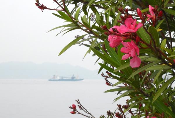 朝きりの中の貨物船を見送る 夾竹桃
