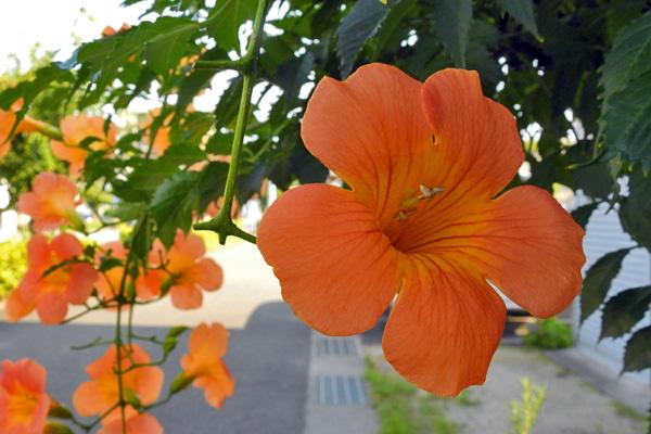 オレンジ色の花をそつと撫でて通る朝の風・・