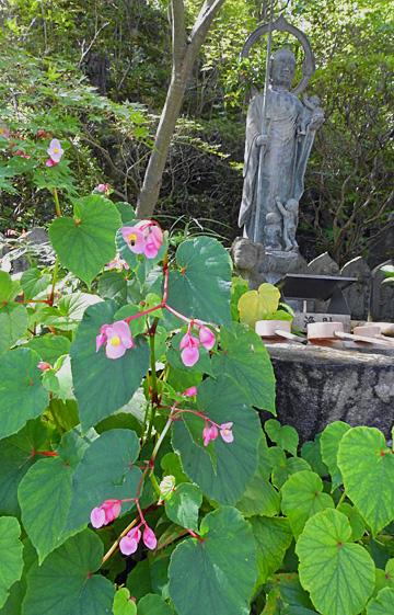 境内の手水のわきにピンクに咲く・・