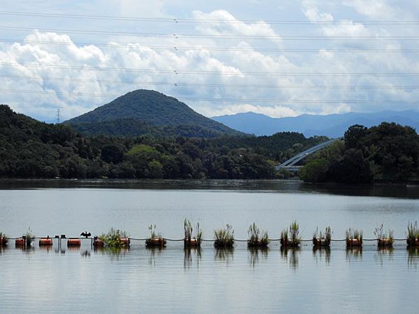 府中湖の川鵜数羽 遊んでいる